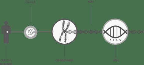 genomica Test Genéticos