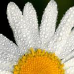 tratamientos medicina estetica primavera 150x150 Actualidad